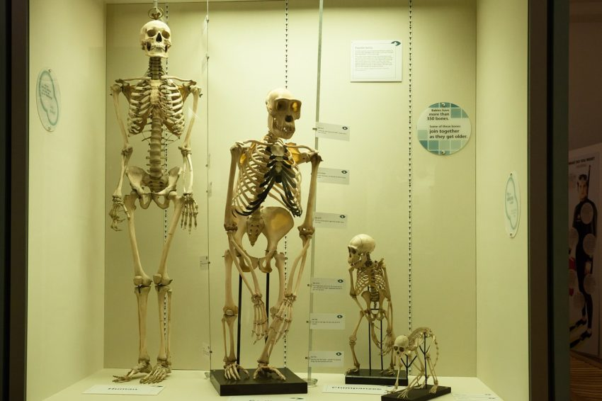 Natural History Museum Exhibition Halls Number